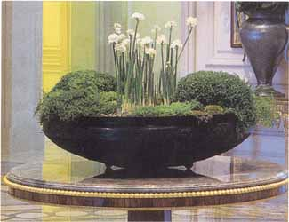 Plants For Home Or Office